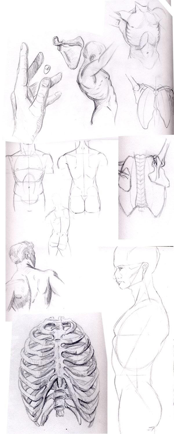 2013-01-13_torso-studies