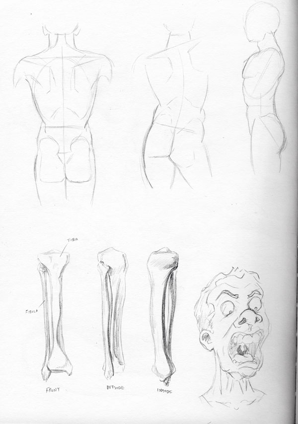 2013-03-21_anatomy-studies01