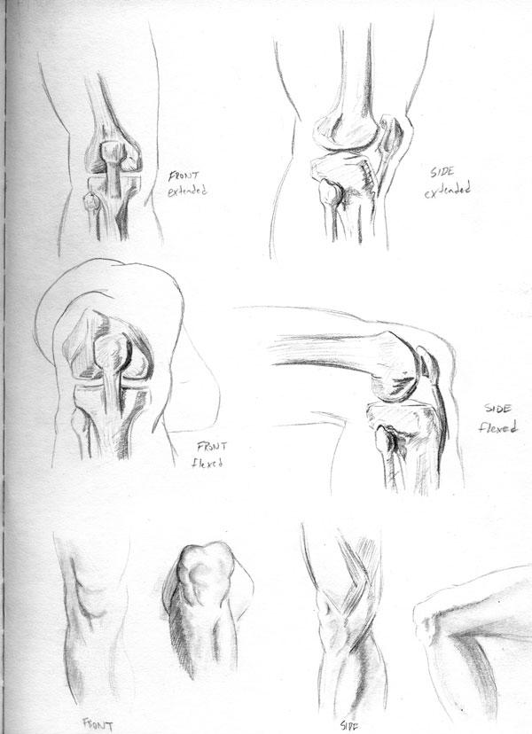 2013-03-21_anatomy-studies02