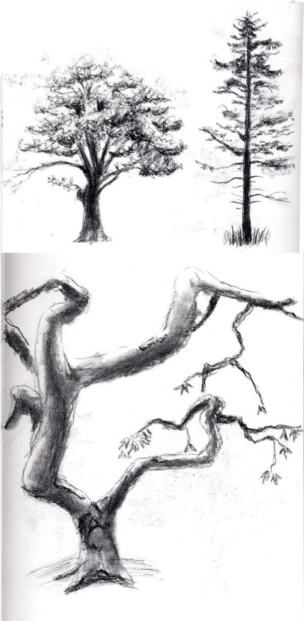 2013-04-19_tree-studies