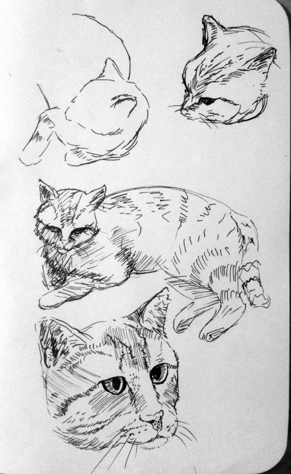 2013-06-05_cat-sketches
