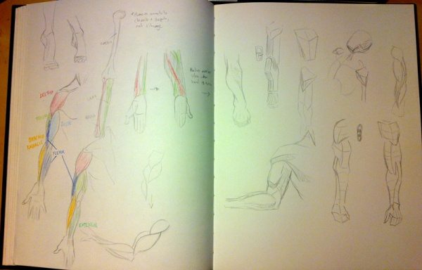 2013-09-23_anatomy-studies02