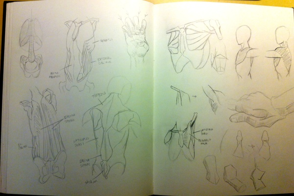 2013-09-25_anatomy-studies