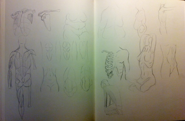 2013-09-27_anatomy-studies