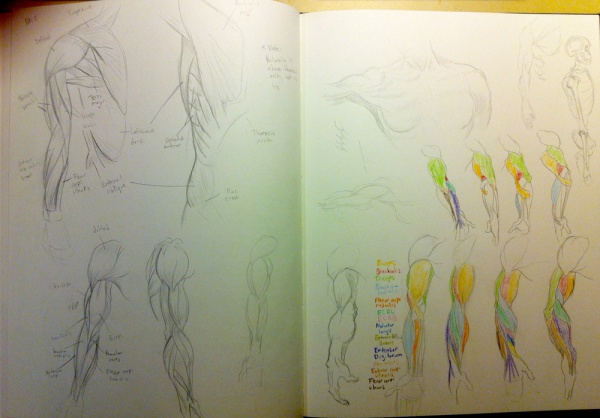 2013-09-28_anatomy-studies