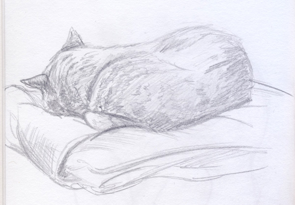 2013-10-27_sleepcat